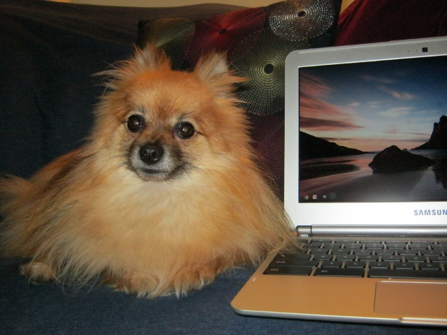 my dog and my chromebook