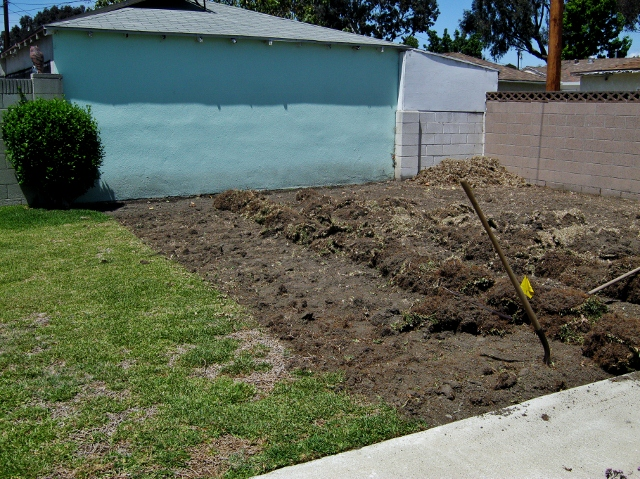 finishing a section of yard with grass dug out