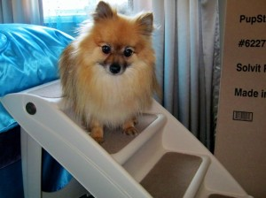 dog sitting on dog stairs