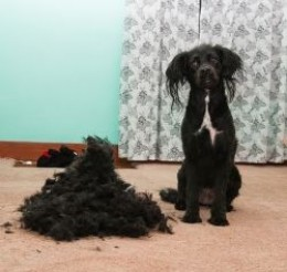 Photo credit: Lilly Full Haircut by BrownPolyester, on Flickr