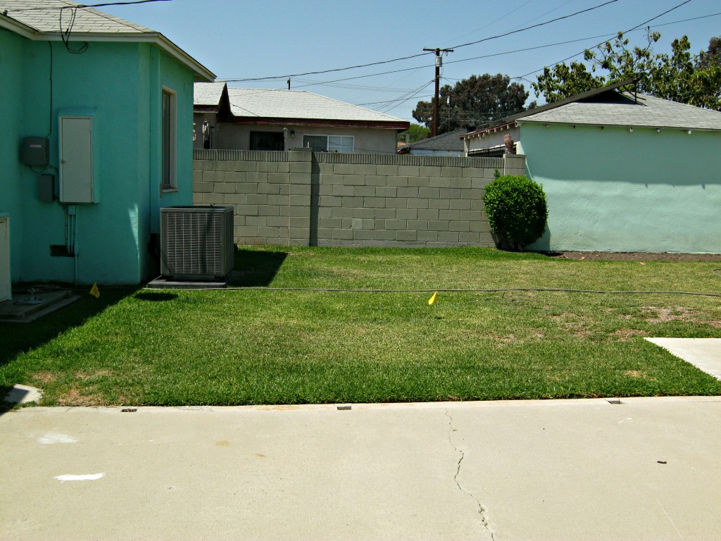 Backyard before grass was removed