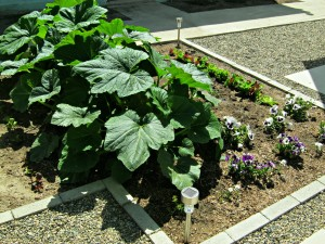 vegetable garden in concrete backyard