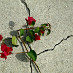 broken flowers and concrete