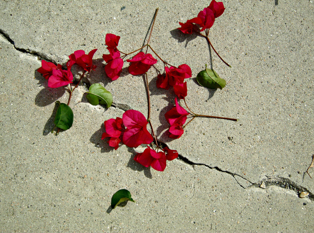 flowers on broken concrete