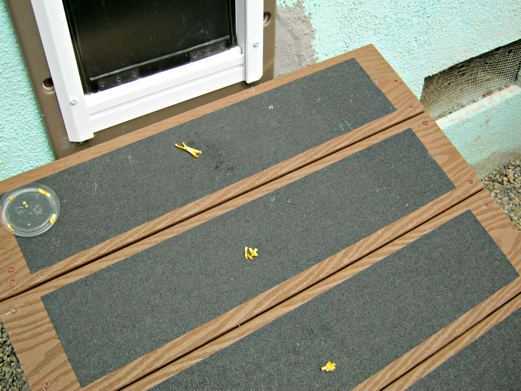 A trail of cheese on the ramp for pet door training