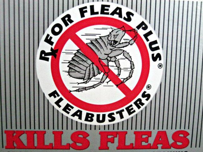 no fleas